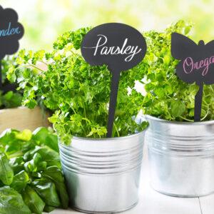 Pflanzen Preisschild Kreidetafel mini zum einstecken